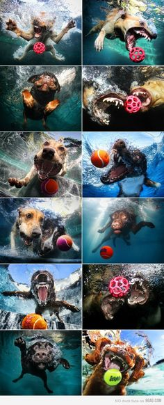 under water dog photography. Cute Puppies, Cute Dogs, Dogs And Puppies, Awesome Dogs, Doggies, Cute Funny Animals, Funny Dogs, Scary Funny, Funny Art
