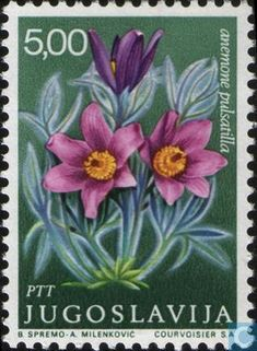 Anemone Pulsatilla -  pasque flower (or pasqueflower), wind flower, prairie crocus, Easter Flower, and meadow anemone. - Medicinal plants (highly toxic) . Post stamp from Yugoslavia , 1969
