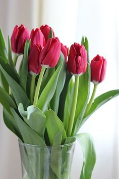 Red Tulips, Tulips Flowers, Flowers Nature, Exotic Flowers, Pretty Flowers, Spring Flowers, Beautiful Flowers Photos, Flower Photos, Amazing Flowers