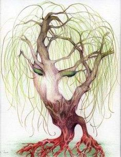 face or tree....this puts a new meaning to weeping willow in my perspective