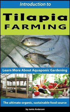 Tilapia Farming - Learn More About Aquaponic Gardening by Jamie Anderson… Backyard Aquaponics, Aquaponics Fish, Aquaponics System, Hydroponic Gardening, Gardening Tips, Tilapia Farming, Fish Farming, Aqua Farm, Floating Garden
