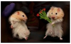 A boy hamster giving a girl hamster some flowers!