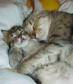 SUBHANALLAH... Inilah Fakta Ilmiah Mengapa Rasulullah SAW Memelihara Kucing? Ternyata...