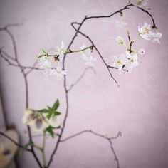 Ikebana inspired wedding flowers. Welcoming spring with a simple floral arrangement that I designed for a Japanese style,afternoon tea. I used the coming of early spring as a motif and focused on minimalism. Overall I tried to capture a simplified image of what I found on my nature walks around my house, as the first signs of spring have finally made an appearance. #teastyle #flowers #ikebana #afternoontea #lovetea #loveflowers #floralarrangements #weddingflowers #tablecentrepieces ...