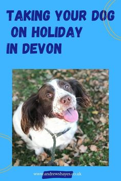 We know that being able to take your dog on holiday with you is really important to many people. Touring or camping with your dog can be great fun and we also have luxury dog friendly static holiday homes to hire. At Andrewshayes in East Devon there are plenty of dog friendly places to take your pet. Devon Holidays, Dog Friendly Holidays, Holiday Park, Dog Walking, Dog Friends, Motorhome, Farm Animals, Caravan, Walks