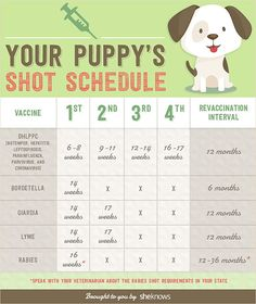 Keep your puppy healthy with this vaccination schedule (INFOGRAPHIC)
