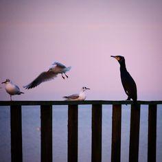 Bare tag plads...#visitfyn #fyn #nature #visitdenmark #naturelovers #natur #denmark #danmark #dänemark #landscape #nofilter #assens #mitassens #vildmedfyn #fynerfin #assensnatur #vielskernaturen #visitassens #instapic  #picoftheday #january #canon #natgeo #sky #winter #january #birds #vogelen