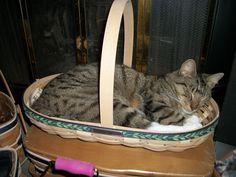 Sweet dreams little kitty