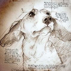 """Oliver, with the Leonardo writing that describes the mischievous Doxie. See what it says on this and the full size """"Dachshund Study"""" at www.leonardosdogs.com"""