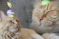 21 Tiny Hats Your Cat Will Love Wearing