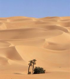 Libyan Desert Desert Dream, Desert Life, Desert Oasis, Beautiful World, Beautiful Places, Desert Sahara, Foto Picture, Deserts Of The World, North Africa
