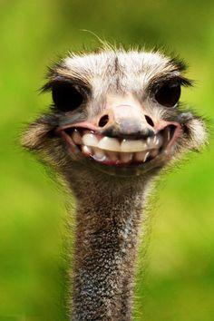 I smile because I'm happy I Smile, Make You Smile, Funny Animals, Cute Animals, Funniest Animals, Funny Birds, Animal Jokes, Real Estate Humor, Hilarious Stuff