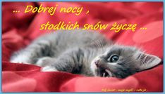 Cat Care Top Tips And Advice. All these things you get as a cat owner. Cool Facebook Covers, Beautiful Facebook Cover Photos, Best Facebook Cover Photos, Facebook Timeline Covers, Fb Covers, Amazing Photos, Grey Cat Wallpaper, Blog Wallpaper, Wallpaper Wallpapers