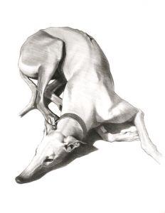 © Thomas Dang Vu, S. 10 Lucky der Windhund, 2010.
