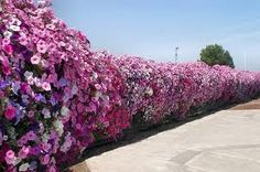 Floral covered chain link fence.  Love it.