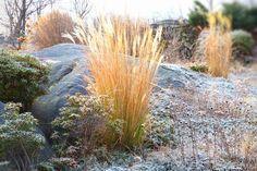 Winter Garden: Hoar Frost.  Garden Design/Photograph: michaela @ thegardenerseden.com