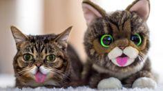 gatos mais famosos
