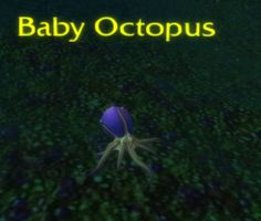 #babyoctopus