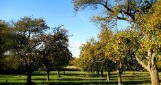Willowbrook Ecology Group | Willowbrook Farm