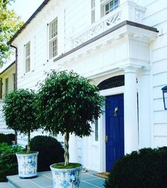 This pretty white house with cobalt blue front door and topiaries in blue and white pots has popped up in my Pinterest feed a lot over the years. It's at once cheery and classic! Does anyone know the original source? #architecture #design #classic #blueandwhiteforever