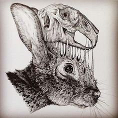 Resultado de imagem para guaxinim scientific illustration