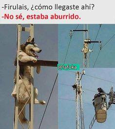 Pasa we xd Funny Spanish Memes, Funny Cat Memes, Funny Relatable Memes, Funny Images, Funny Pictures, Funny Animals, Cute Animals, Mexican Memes, Pinterest Memes