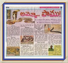 Na Hrudhaya Spandhana: Snake knoledge