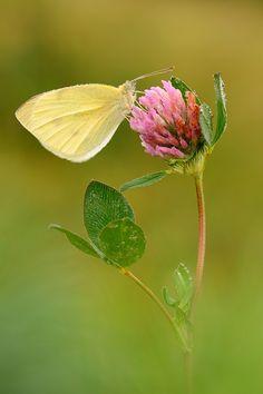 Beautiful Butterflies, Butterflies Flying, Mother Nature, Habitats, Bugs, Beautiful Pictures, Creatures, Butterfly, Dragonflies