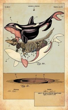 Orca Anatomical Illustration Exploded View Scientific Illustration, My Favorite, Digital Art Illustration, Science Illustration, Photo Illustration, Ocean Illustration, Animal Illustrations, Medical Illustration, Botanical Illustration, Animal Drawings, Scientific Drawing