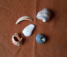 Frammenti di conchiglie materiali per creare di lepropostedimari