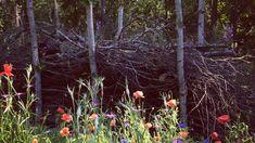 Bjud in insekterna och ge din trädgård det allra bästa   Trädgård   svenska.yle.fi Garden, Plants, Craft Ideas, Garten, Lawn And Garden, Gardens, Plant, Gardening, Outdoor