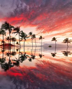 Nothing beats the amazing sunsets Hawaii has to offer!Maui Hawaii Nothing beats the amazing sunsets Hawaii has to offer! Hawaii Life, Maui Hawaii, Wailea Hawaii, Sunsets Hawaii, Hawaii Travel, Best Vacations, Vacation Trips, Vacation Style, Oahu