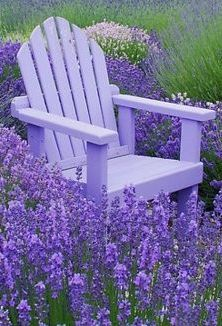 Lavender heaven at the Purple Haze Lavender Farm in Sequim, Washington • photo: Marjorie Wallace on RedBubble