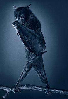 Tim Flach, Opera Bat