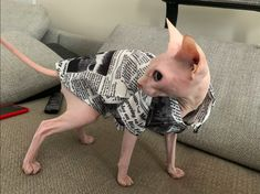 Sphynx Cat Clothes, Hairless Cats, Cat Dresses, Orange Cats, Cat Aesthetic, Cats And Kittens, Spring Outfits, Cute Cats, Cute Animals