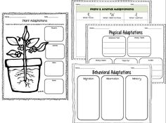 graphic organizers for adaptations