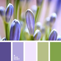 New bedroom colors schemes purple design seeds Ideas Purple Color Palettes, Spring Color Palette, Pink Color Schemes, Green Colour Palette, Blue Colour Palette, Bedroom Color Schemes, Color Combos, Bedroom Colors, Bedroom Green