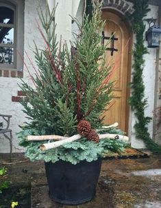 and state: Winter Containers 2016 Outdoor Christmas Planters, Christmas Urns, Front Door Christmas Decorations, Christmas Eve, Christmas Flower Arrangements, Christmas Centerpieces, Winter Container Gardening, Winter Planter, Birch