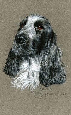 American Cocker Spaniel, Cocker Spaniel Puppies, Animal Paintings, Animal Drawings, Dog Drawings, Dog Pictures, Animal Pictures, Cockerspaniel, English Cocker