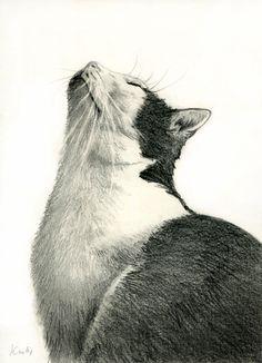 Tuxedo Cat sunbathing by art-it-art.deviantart.com on @deviantART.Graphit, Bleistift Zeichnung auf 200 Gramm Künstlerpapier... ♥ ...black & white Kitten ...original Pencil drawing ...Format: 18 x 25 cm - 7 x 10 inches..