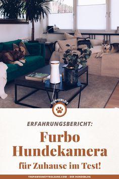 Produktplatzierung. Furbo HundekameraTest, Furbo dog camera kaufen, furbo hundekamera Erfahrungsbericht, Hundekamera für zuhause, hunde Kamera für unterwegs, hundekamera mit sprachfunktion, hundekamera mit ton, hundekamera app, hundekamera furbo app gesteuert, Hundeblogger Produkttest, Hundeblog aus Österreich, www.thepawsometyroleans.com #hundeblog #furbo #dogcamera #hundekamera #furbo #dogblogger #petfluencer Furniture, Home Decor, Dog Accessories, Dog Owners, Vet Office, Pooch Workout, Camera, Clay, Decoration Home