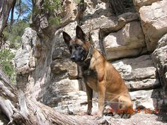 On the Rock! Fordogtrainers.com Photography Contest Photo.