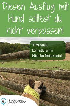 Dieser hundefreundliche Tierpark ladet zu Begegnungen mit Reh und Hirsch. Hinter den Zäunen warten aber auch Wildschweine, Wölfe, Ziegen, Hängebauchschweine und vieles mehr. Einen Ausflug wert! #hund #hunde #ausflug #tierpark #wildpark #österreich #niederösterreich #wandern #wanderung #reiseblog #hundeblog Dogs, Fitness, Dog T Shirts, Animals Dog, Pets, Cats, Wild Boar, Pet Dogs, Doggies