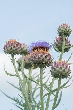 Google Images, Glass Vase, Seasons, Water, Flowers, Plants, Provence, Gardens, Decor