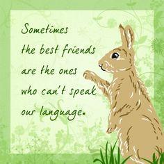 A common language through friendship -  yep, that's pet rabbits!