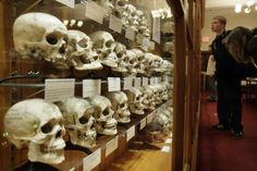 Some of the 139 skulls in the Hyrtl Skull Collection of Europeans from the 1800s at the Mutter Museum in Philadelphia, Penn. Evolution and genetics seem to have baked a certain amount of murder into humans as a species, according to a new study.