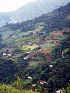 sembradios en Galipan cerro Avila- Caracas Venezuela