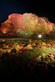 Lake Kawaguchi Autumn Festival, Japan