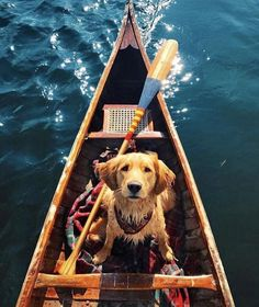 Dog in a Kayak on an adventure... all the good things #kayak #dog #adventure #travel #photography