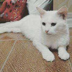 """""""Oi, sou a mamãe Marie, só passando para dar um oi e dizer que meu LT tá muitooo boa vida mas que tô esperando meu lar definitivo assim que meus filhotes estiverem bem fortes! """" Marie sendo charmosa ❤️ --------------------------------------------------- www.catland.org.br www.catlandlojinha.com.br  catlandrescue@gmail.com --------------------------------------------------- #catland #gocatland #catlandrescue #instacats #catlovers #catsofinstagram #catoftheday #ilovecats #adote #adotenãocompre"""
